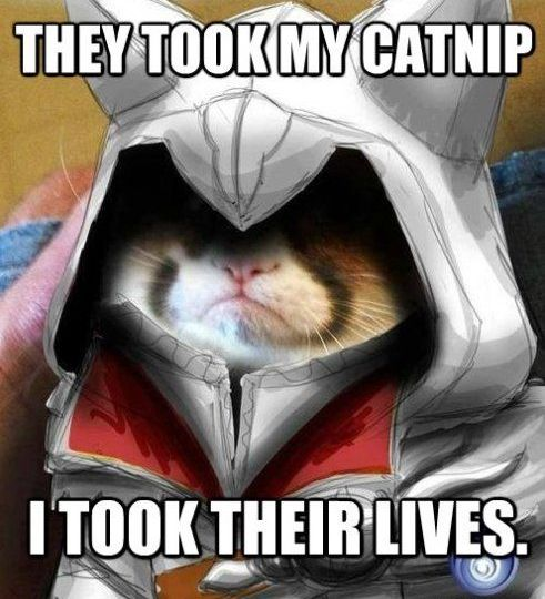 assassincat