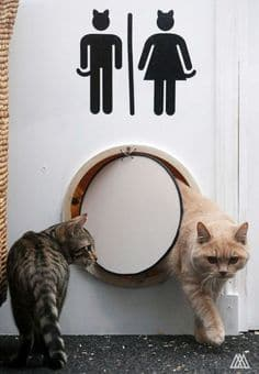 cats sanitaire